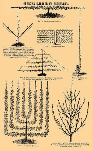 Обрезка плодовых деревьев, декоративных и ягодных кустарников.  Омолаживание старых и формирование молодых деревьев.